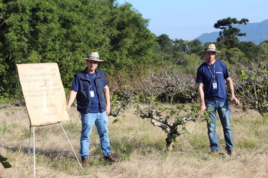 Técnicos da Emater em demostração sobre o manejo de figueiras