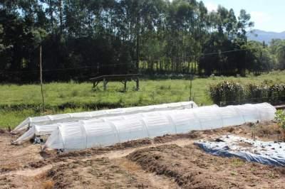Tabaco: agricultor antecipa semeadura em canteiros