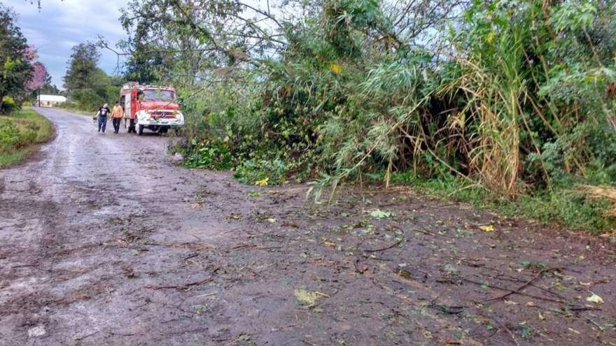 Na Linha do Rio, Bombeiros Voluntários de Candelária removeram uma árvore que estava caída na pista (Foto: Arzélio Strassburger)