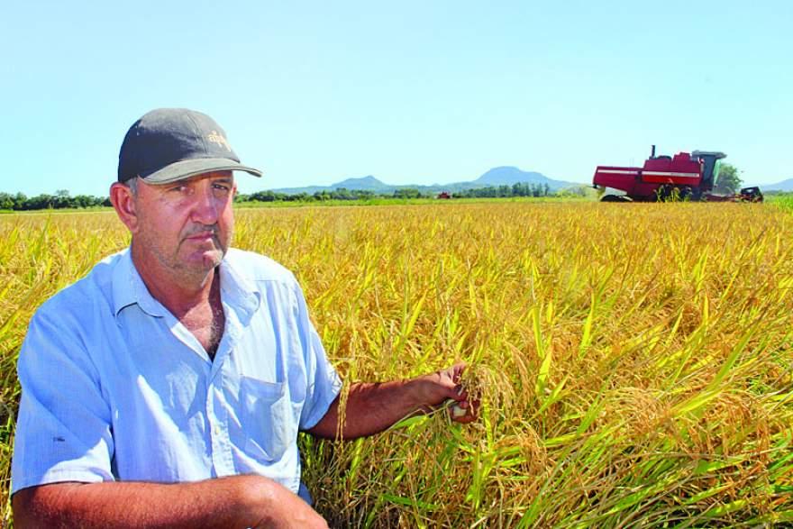 Agricultor Rui Kohl destaca a sua insatisfação com o baixo preço do arroz