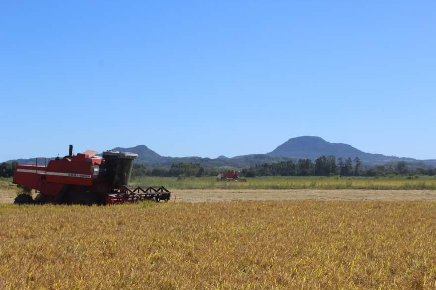Em Candelária, colheita atingiu 3,13% nesta semana - Crédito: Tiago Mairo Garcia - Folha