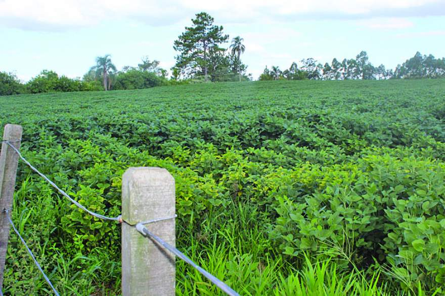 Os baixos volumes de chuva seguem preocupando os produtores de soja