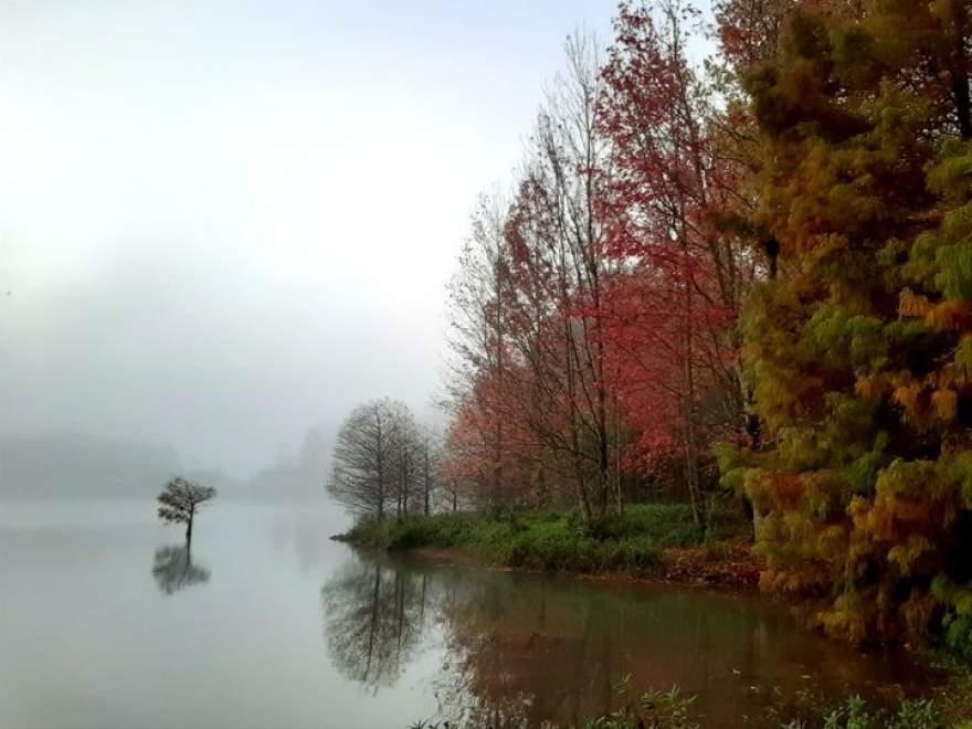 Parque Witeck: floresta com árvores do mundo inteiro