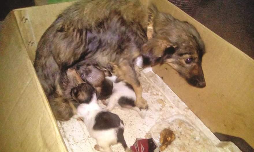 Belinha e seus três filhotes foram salvos após abandono. Mãe e filhotes já possuem novo lar