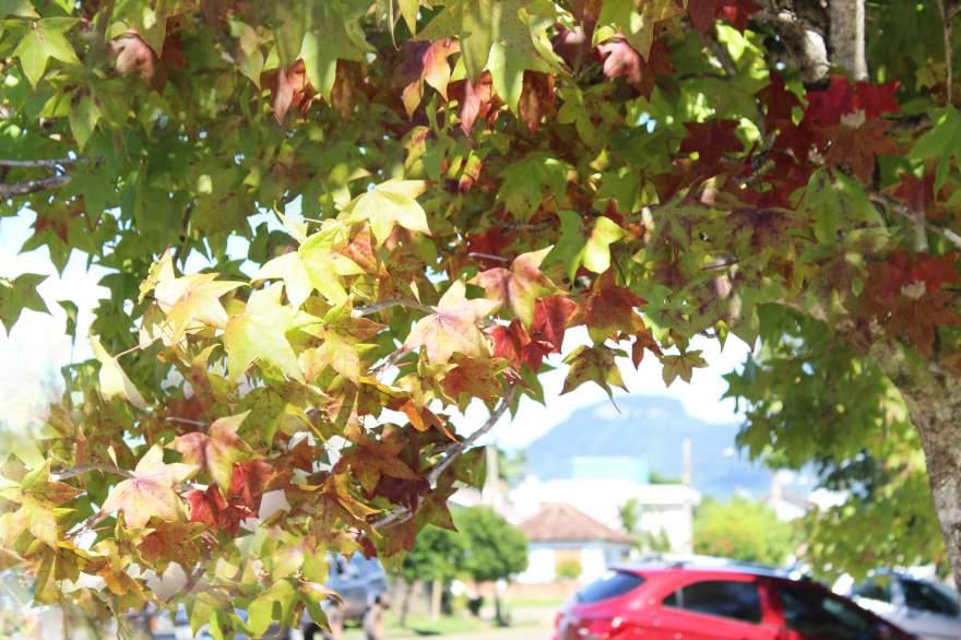 Outono:Previsões indicam clima ameno e mais chuvas