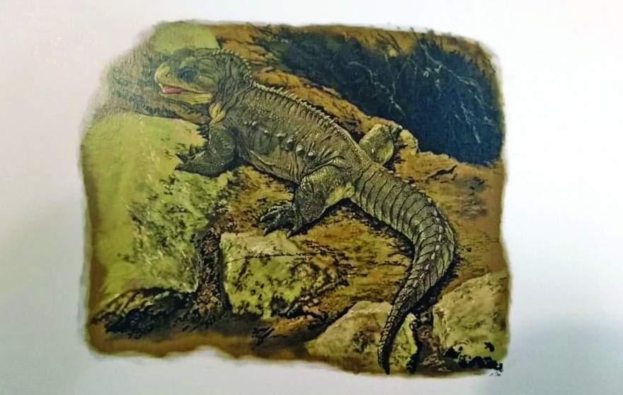 Encontrada na Linha Bernardino, nova espécie é o mais antigo de que se tem notícia no mundo