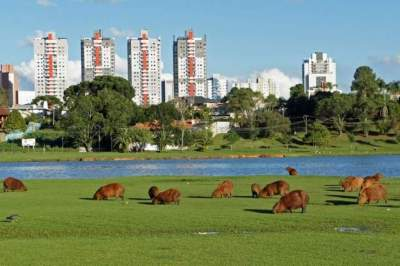 Por Erni Bender: a linda Curitiba para visitar