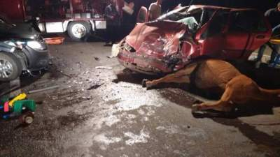 Acidente envolvendo cavalo e dois veículos deixa cinco feridos
