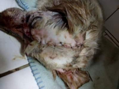 Cachorra é alvo de maus tratos no Bico do Arado