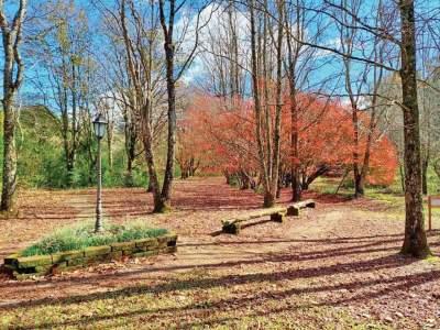 Parque Witeck: um local para ser visitado nas quatro estações