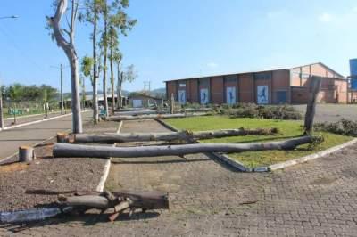 Retirada de eucaliptos no Parque de Eventos gera polêmica nas redes sociais