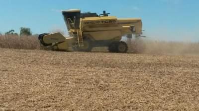 Agricultura: produção de soja supera a de tabaco em valores