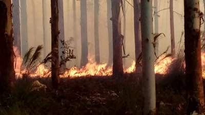 Bombeiros Voluntários controlam incêndio em mato de eucalipto