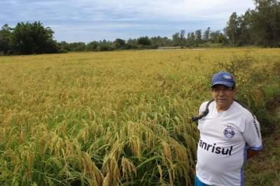 Aldo Melo de Vargas e sua lavoura de arroz japonês no Rincão de Fora