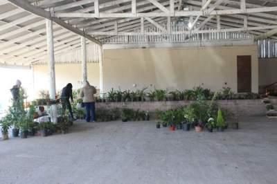Evento conta com comercialização de plantas no pavilhão aberto