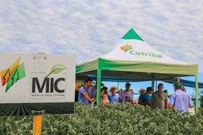 Cotribá reúne 400 produtores em dia de campo