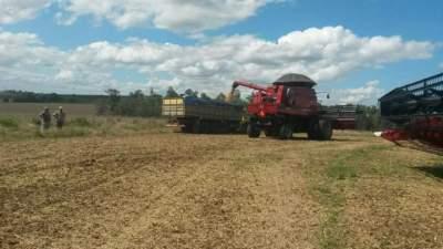 Colheita de soja chega aos 25% em Candelária